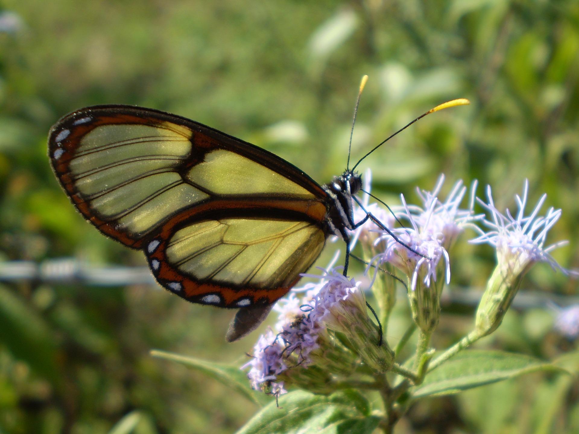 glass-butterfly-2522484_1920