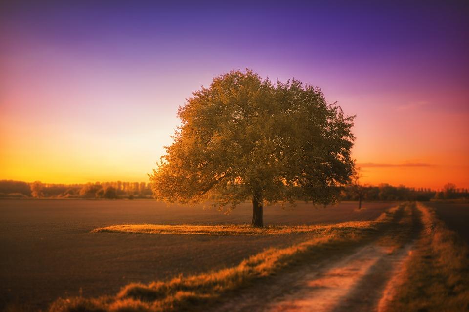 tree-1992141_960_720